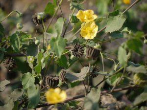 Hình ảnh cây cối xay